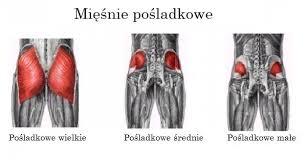 FizjoBodyMed - Anatomia z FizjoBodyMed #48 Mięsień...   Facebook