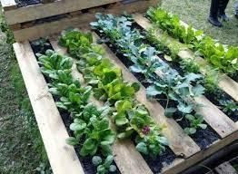 Warzywniak z palety | Pallet garden, Pallets garden, Garden beds