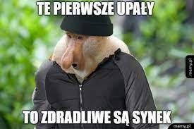 Upał memy - artykuły | Gazeta Pomorska