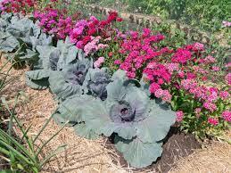 Warzywa i kwiaty - kolorowa mieszanka - Mój Piękny Ogród - Ogrody ozdobne,  Rośliny, Kwiaty