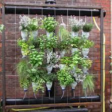 W jaki sposób uprawiać zioła, wykorzystując ścianę domu? - Zakumaj.pl