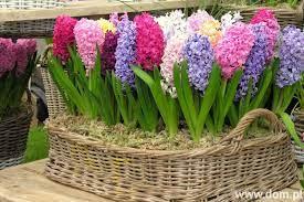 Wielkanocne dekoracje. Świąteczne rośliny i kwiaty | Dom.pl